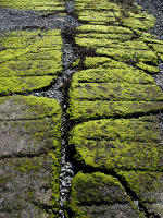 Close Up Photo of Green Moss on Stones